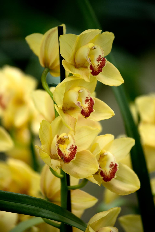 orchidées au jardin des plantes | Daniel Nassoy Artiste Photo ...
