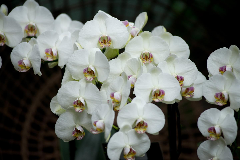orchidées au jardin des plantes   Daniel Nassoy Artiste Photo\'Graphiste
