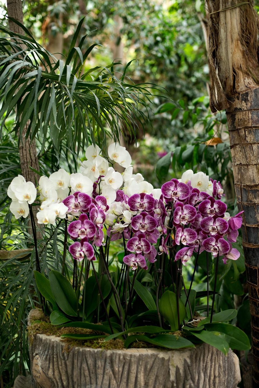 orchidées au jardin des plantes | Daniel Nassoy Artiste Photo\'Graphiste