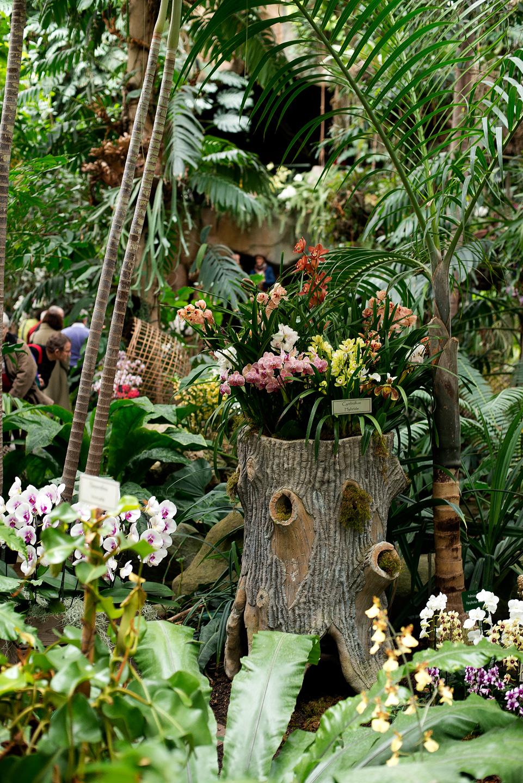 Orchid es au jardin des plantes daniel nassoy artiste for Au jardin des plantes poem